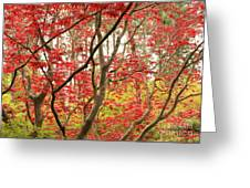 Red Maple Leaves And Branches Greeting Card