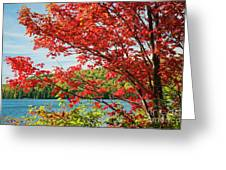 Red Maple On Lake Shore Greeting Card