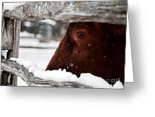 Red Milking Devon Snowflakes Greeting Card