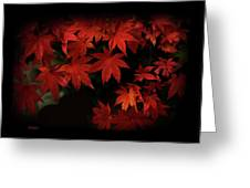 Red  Momiji Greeting Card