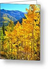 Red Mountain Aspens Greeting Card