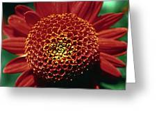 Red Mum Center Greeting Card