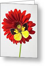 Red Mum With Dogface Butterfly Greeting Card