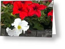 Red N White Greeting Card