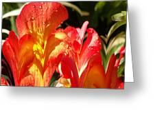 Red N Yellow Flowers 2 Greeting Card