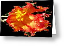 Red N Yellow Flowers Greeting Card