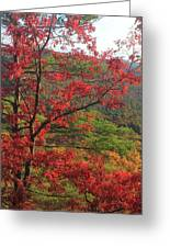 Red Oak And Millers River Valley Greeting Card