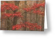 Red Oak In Fog Greeting Card