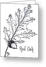 Red Oak Leaf And Acorn Greeting Card