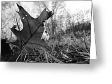 Red Oak Leaf Four Greeting Card