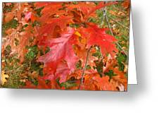 Red Oak Leaves Greeting Card
