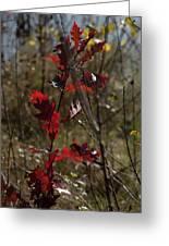 Red Oak Greeting Card