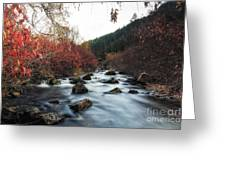 Red Oak Slow River Greeting Card