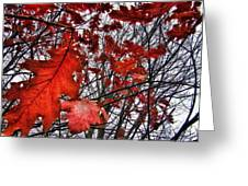 Red Oaks Greeting Card
