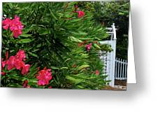 Red Oleander Arbor Greeting Card