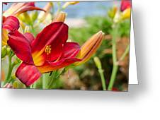 Red Orange Lily By The Lake Greeting Card