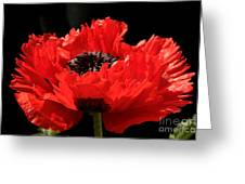 Red Orange Oriental Poppy Greeting Card