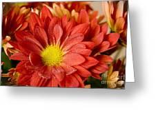 Red Orange Shasta Greeting Card