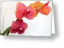 Red Pink Golden Orchid Flowers 03 Greeting Card