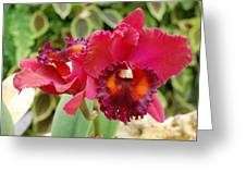 Red Orchid Greeting Card