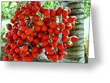 Red Palm Tree Fruit Greeting Card