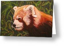 Red Panda 2 Greeting Card