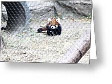 Red Panda Cub Greeting Card