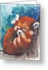 Red Panda Sleeping Greeting Card