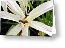 Red Paper Wasp And Spider Lily 000 Greeting Card