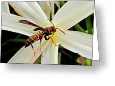 Red Paper Wasp And Spider Lily 001 Greeting Card