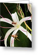 Red Paper Wasps And Spider Lily Greeting Card