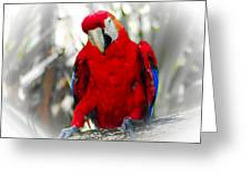 Red Parrot Greeting Card