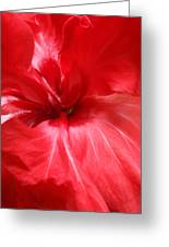Red Passion 2 Greeting Card