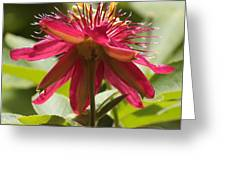 Red Passion Flower Greeting Card