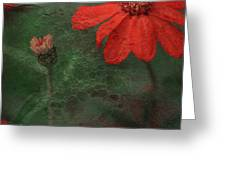 Red Passion... Greeting Card