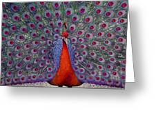 Red Peacock Greeting Card