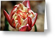 Red Peony Tulip Greeting Card