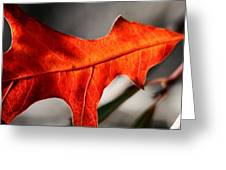 Red Pin Oak Leaf Greeting Card