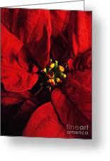 Red Poinsettia Floral Art Greeting Card