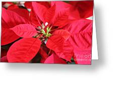 Red Pointer Greeting Card