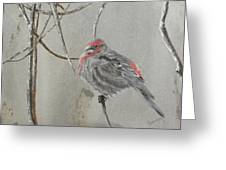 Red Poll In Winter Greeting Card