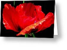 Red Pop Photograph Greeting Card