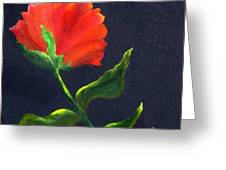 Red Poppie Greeting Card
