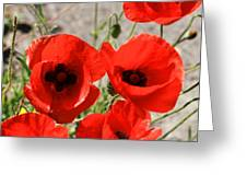 Red Poppies 2 Greeting Card