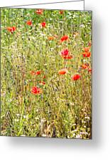 Red Poppies And Wild Flowers Greeting Card