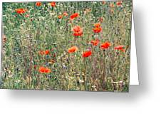 Red Poppies In A Summer Sun Greeting Card