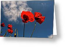 Red Poppies On Blue Sky Greeting Card