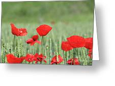 Red Poppy Flower And Green Wheat Nature Spring Scene Greeting Card