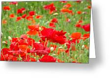 Red Poppy Flowers Meadow Art Prints Poppies Baslee Troutman Greeting Card