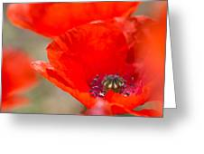Red Poppy For Remembrance Greeting Card